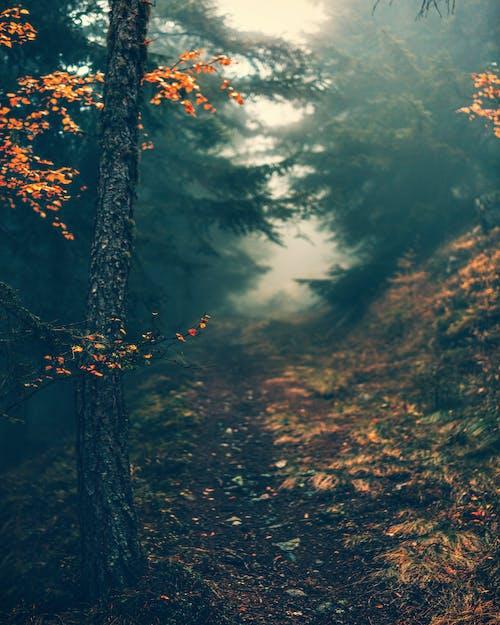 Weg Tussen Groene Bomen