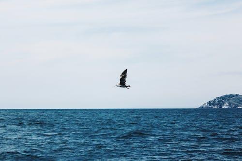 Fotobanka sbezplatnými fotkami na tému lietanie, modrý oceán, more, oceán