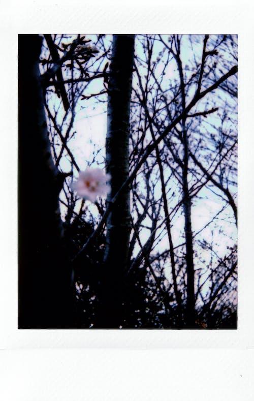 그림, 나무 껍질, 나뭇가지, 사진의 무료 스톡 사진