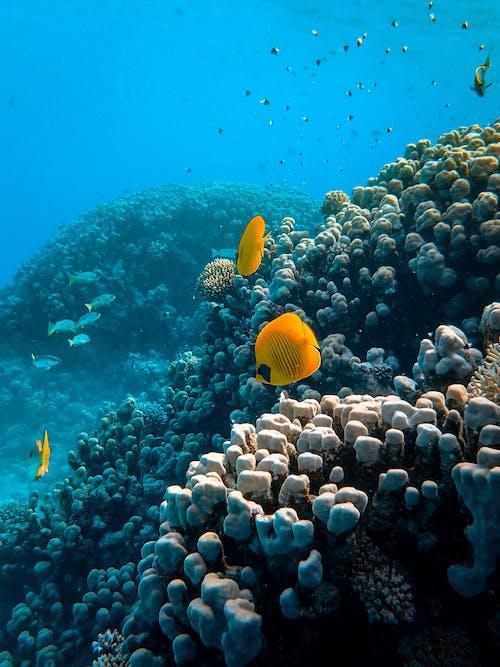 Fotobanka sbezplatnými fotkami na tému divočina, druhy rýb, fotografie zvierat žijúcich vo voľnej prírode, hĺbka