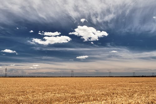 Free stock photo of agriculture, farming, wheat field