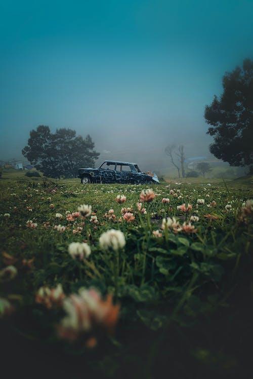 Gratis lagerfoto af agerjord, bane, beskadiget bil, blomster