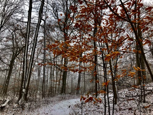 Free stock photo of forest, trees, winter, winter leaves