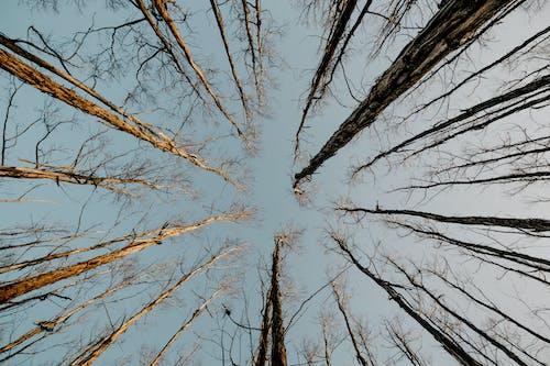 Photos gratuites de branches, grands arbres, jour, photo en contre-plongée