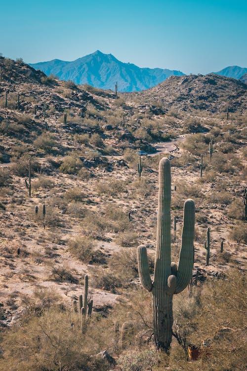 乾旱, 乾的, 亞利桑那州, 仙人掌 的 免費圖庫相片