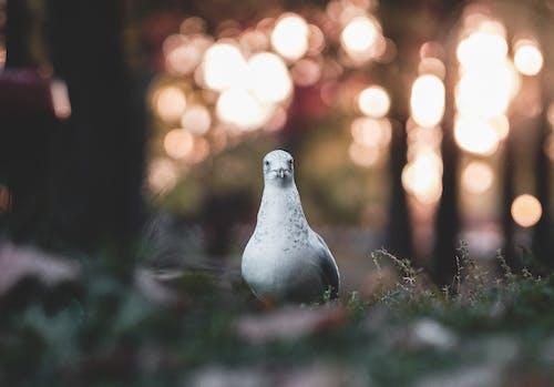 คลังภาพถ่ายฟรี ของ นก, นกพิราบ, นกสีขาว, สัตว์