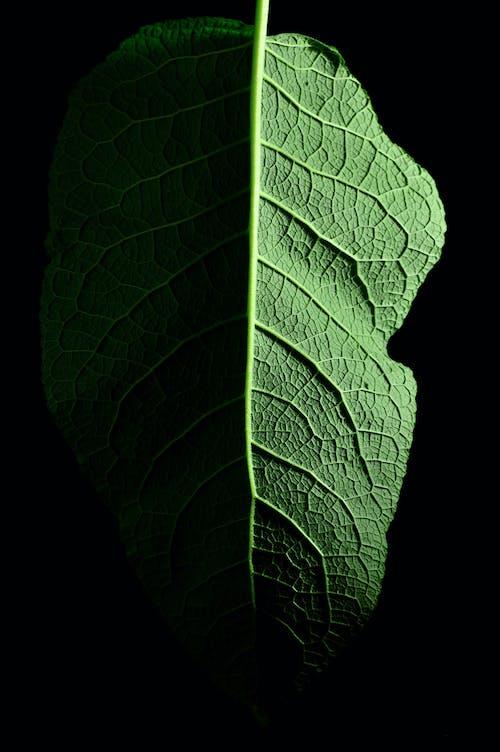 Foto d'estoc gratuïta de asimetria, flora, fulla, fulla verda