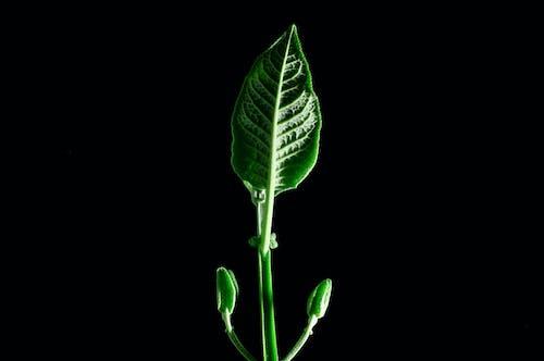 Foto d'estoc gratuïta de botànic, botànica, ecologia, flora
