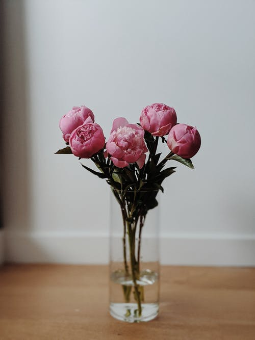 Minimalist Photography of Pink Carnation Flowers in a Clear Glass Vase