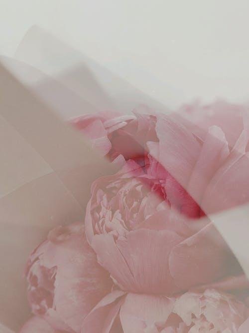 Kostnadsfri bild av blombukett, blommig bakgrund, blommor, blomning