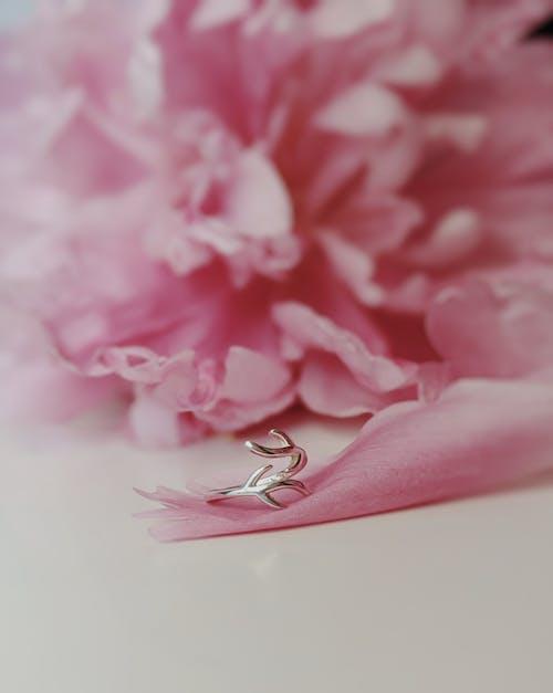 Gratis lagerfoto af æstetisk, blomster, blomstermotiv, blomstrende