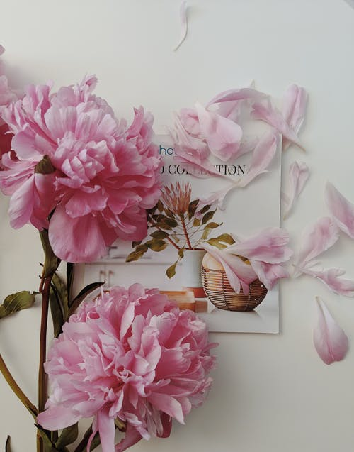 Pink-petaled Flowers on Top of a Greeting Card