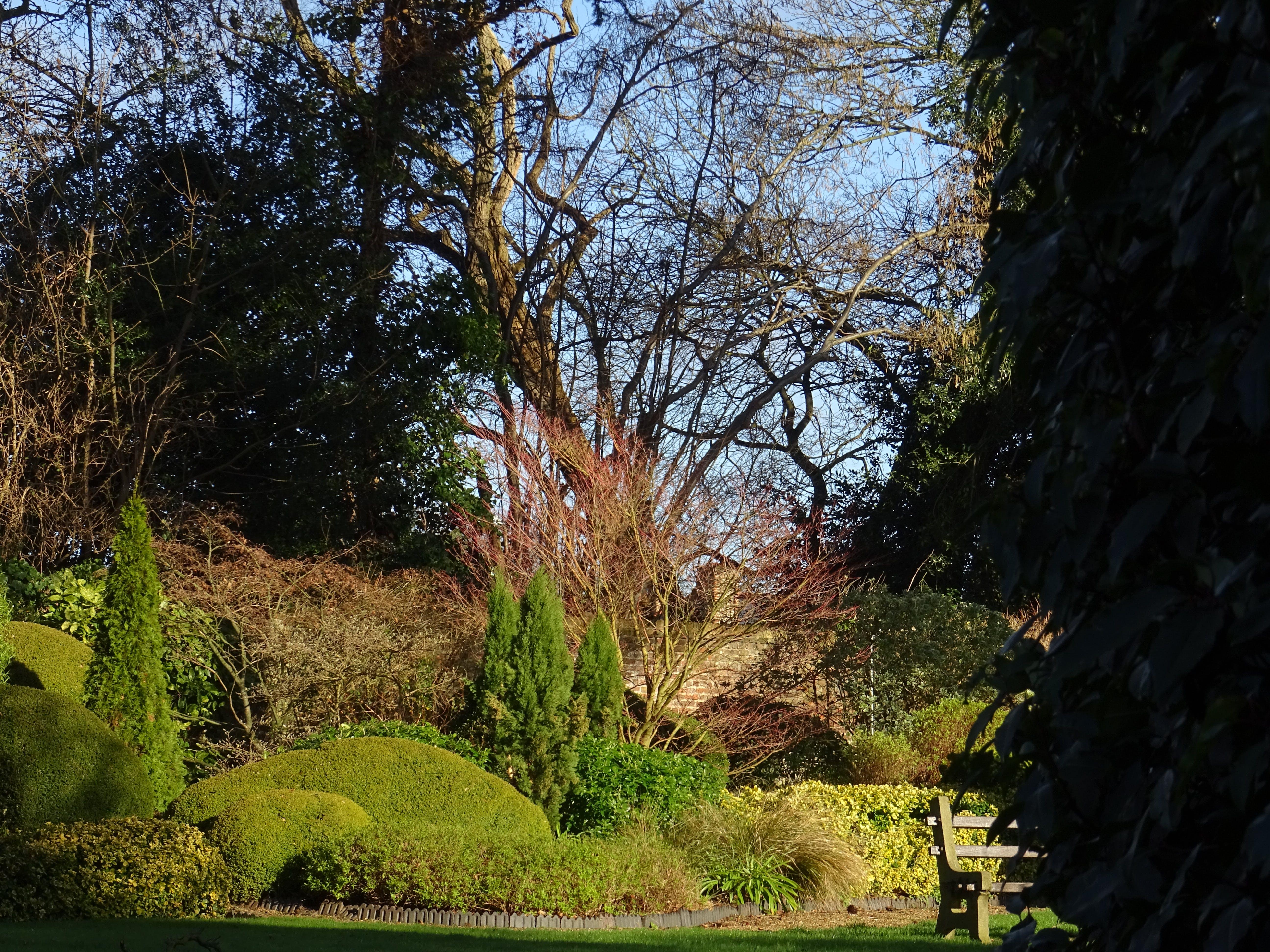 Fotos de stock gratuitas de arboles, banco, césped, jardín
