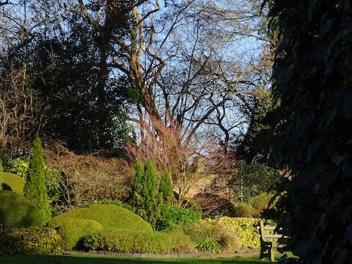 Foto profissional grátis de árvores, assento, grama, jardim
