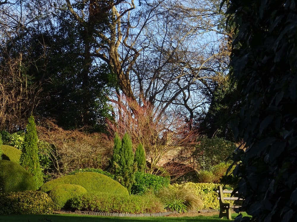 경치, 공원, 나무