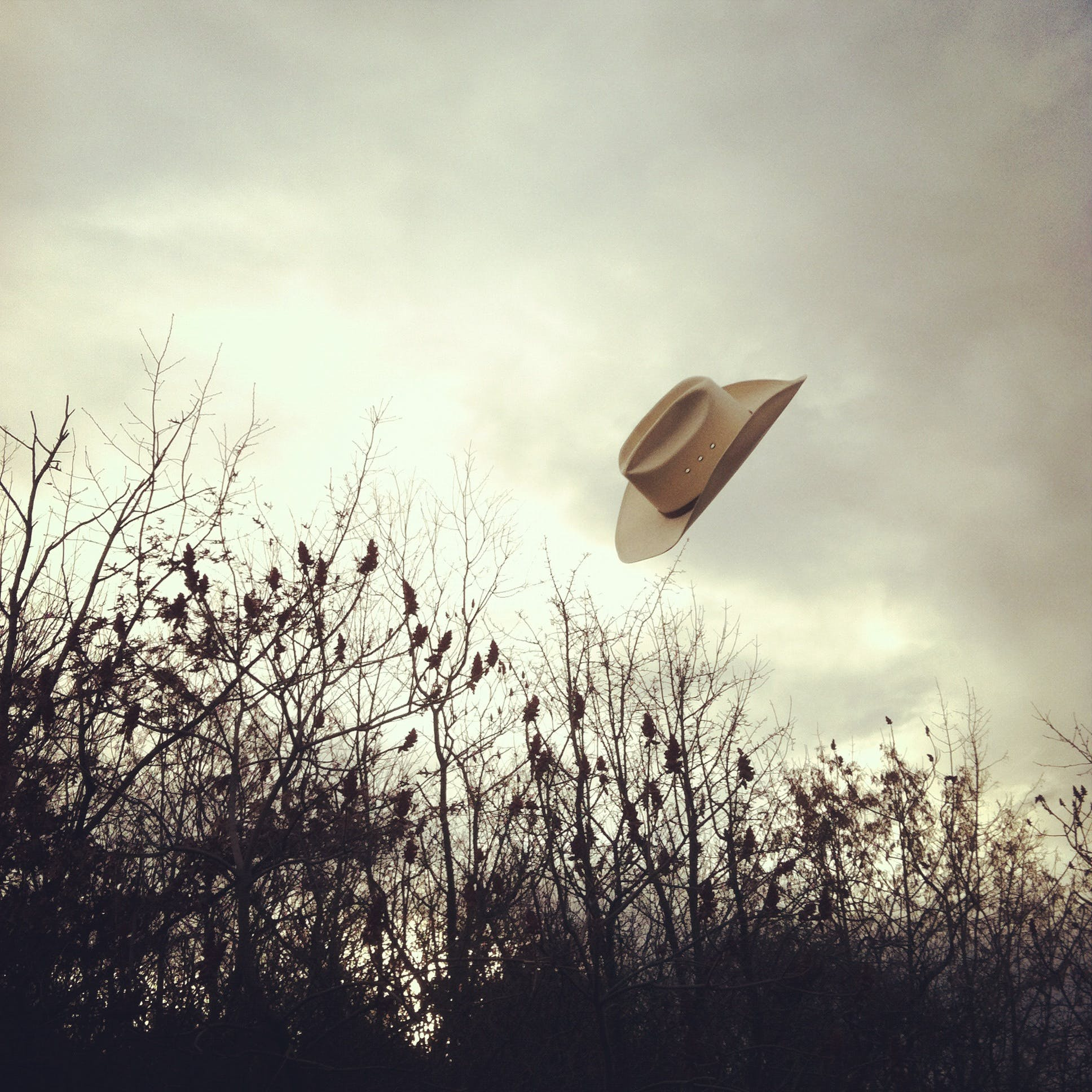 Free stock photo of flying hat