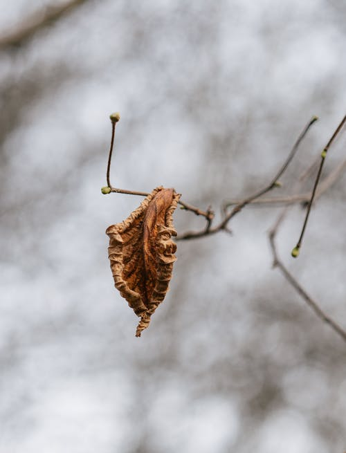 Free stock photo of leaf, nature