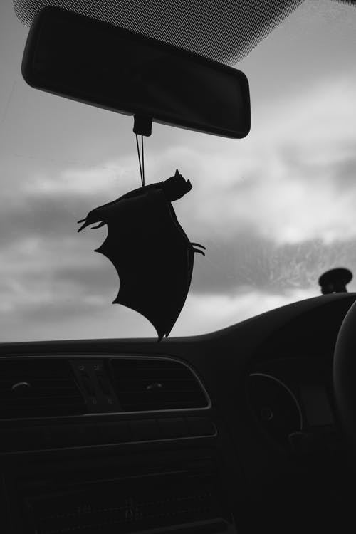 Free stock photo of bat, car, journey