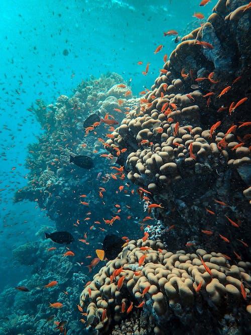 Gratis stockfoto met diepte, het leven in zee, koraal, koraalrif