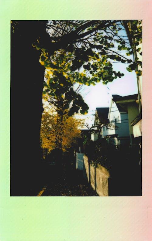 Gratis stockfoto met afbeelding, beeld, bladeren, bomen