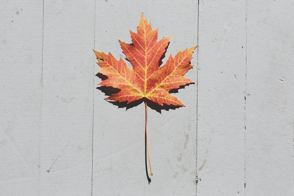 Orange Leaf on White Surface