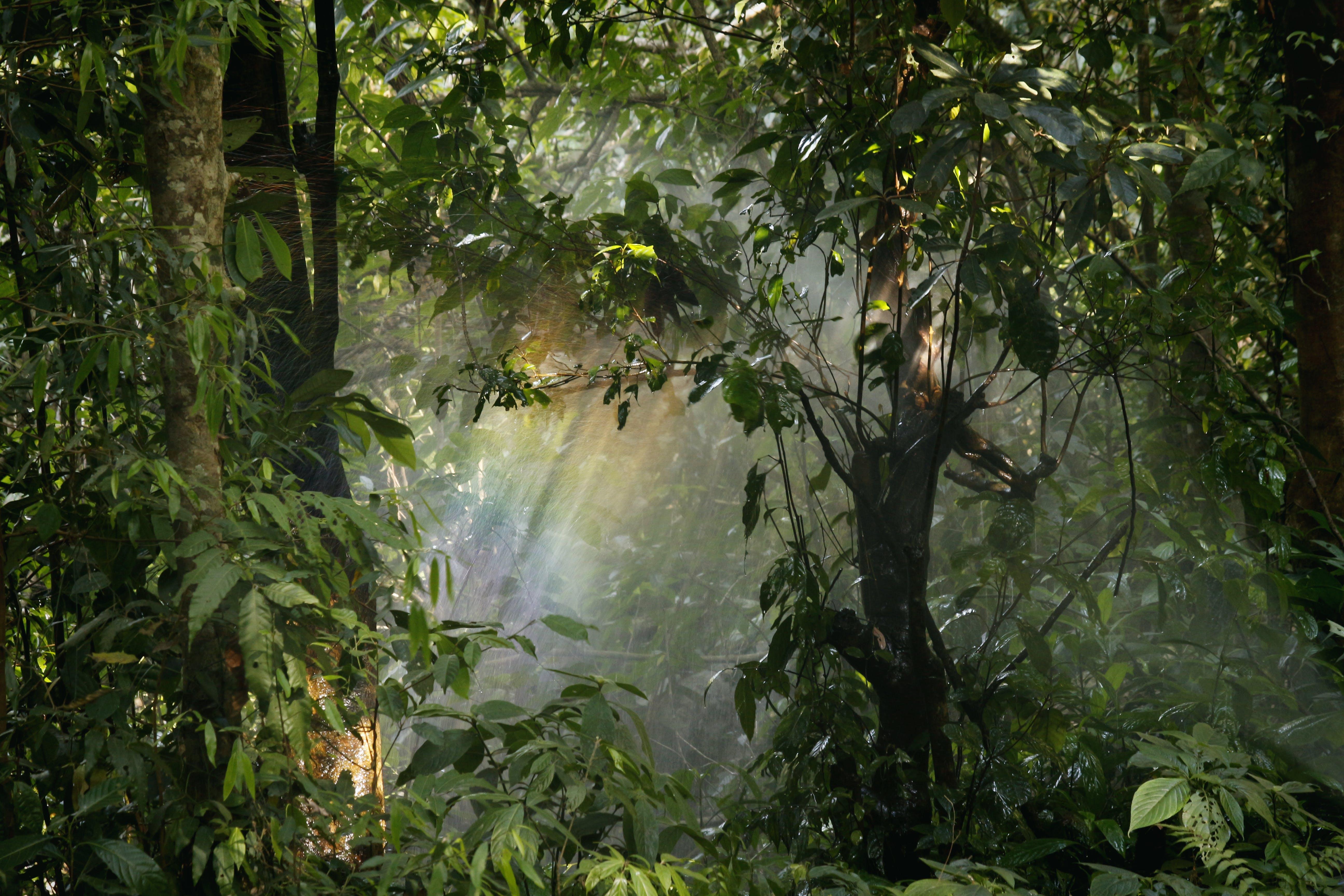가지, 경치, 광야, 나뭇잎의 무료 스톡 사진