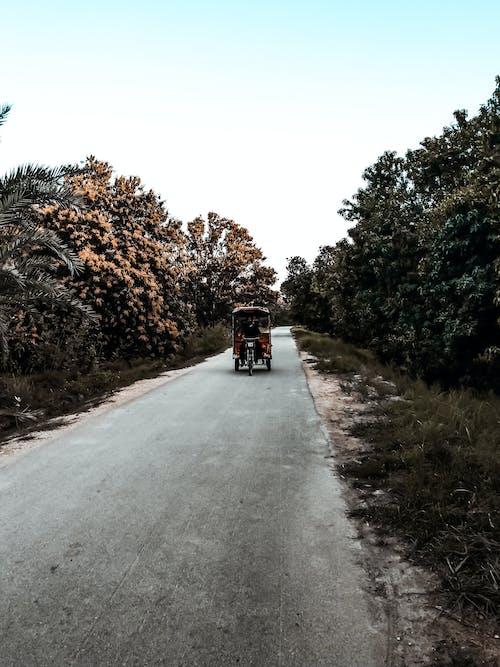 ağaç, Oto, rakhesha, yol içeren Ücretsiz stok fotoğraf