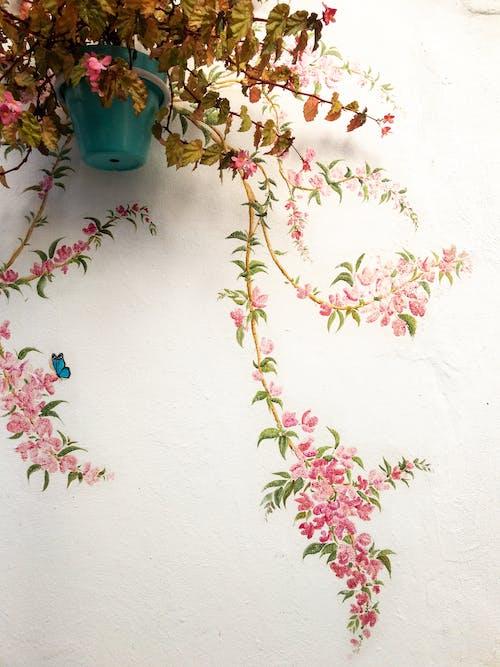 Ilmainen kuvapankkikuva tunnisteilla begonia, kukka, muuri, seinätaide