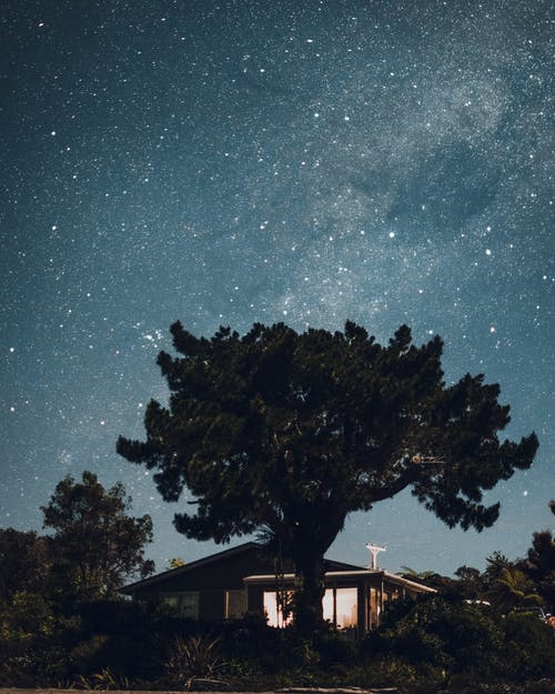 Green-leafed Tree in Front of a House Under a Starry Sky during Nighttime