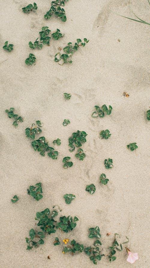 Immagine gratuita di giorni di spiaggia, primo piano, sabbia