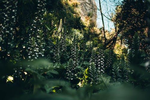 Immagine gratuita di bambù, bellissimo, fiore