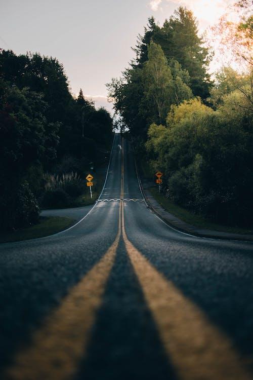 Strada Asfaltata Diritta Tra Alberi