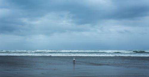 Gratis stockfoto met blauwe kleur, dagelijks licht, grote oceaan