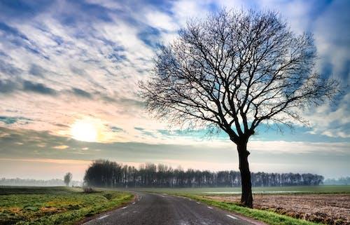 Безкоштовне стокове фото на тему «bur небо, асфальт, безтурботний, газон»