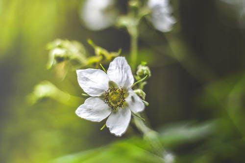 Gratis lagerfoto af #blomst, #frisk, #grøn, #luft