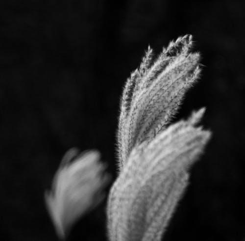 Бесплатное стоковое фото с абстрактный, глубина резкости, зима, лето