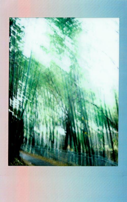 Ilmainen kuvapankkikuva tunnisteilla bambu, bambupuut, kasvu, luonto