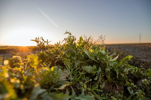 下落, 冬天的背景, 大自然, 日出 的 免费素材照片