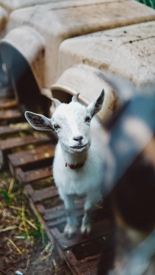 Fotos de stock gratuitas de animal, animal domestico, doméstico, enfoque selectivo