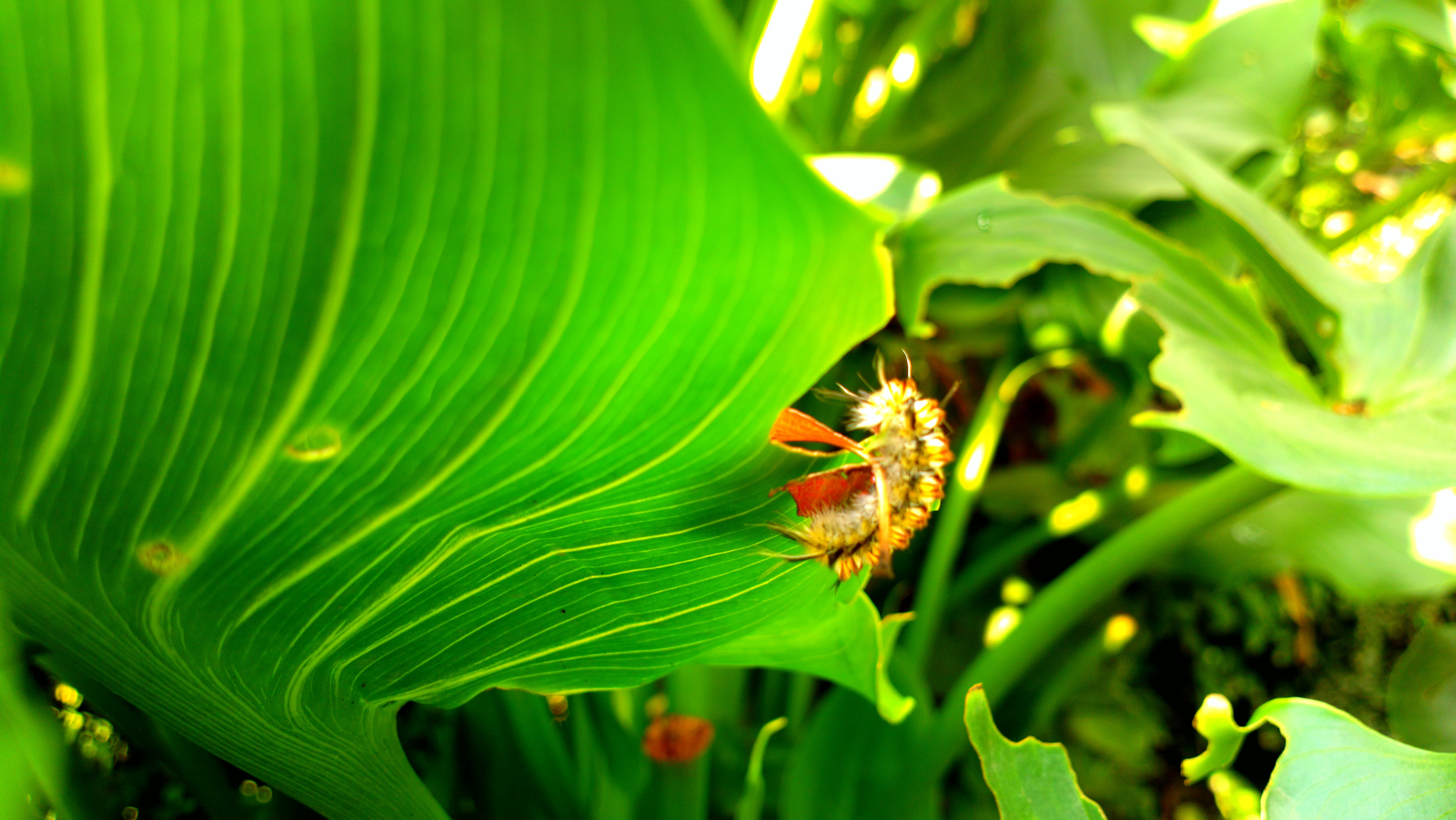 Free stock photo of green, insect, nature