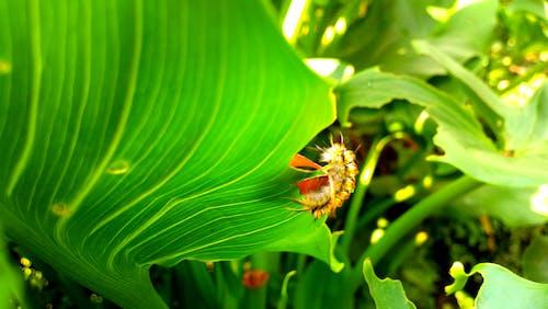 Ilmainen kuvapankkikuva tunnisteilla hyönteinen, luonto, vihreä