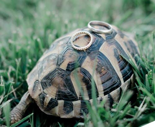 bhfyp, instagood, 가족, 거북이의 무료 스톡 사진