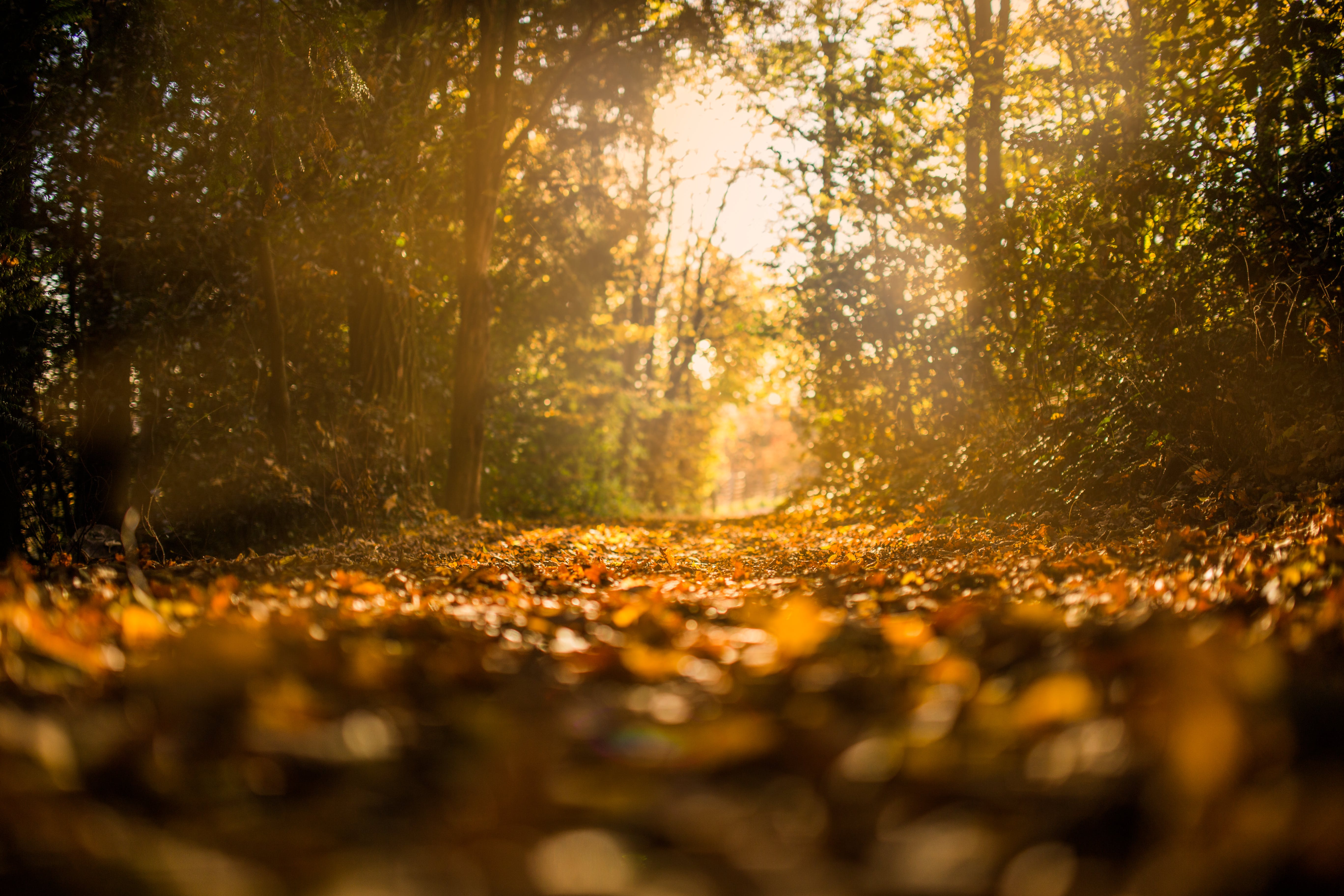 autumn, fall, forest