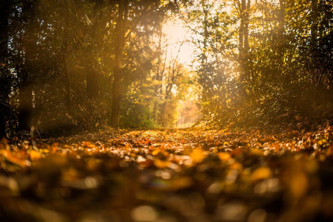 Imagine de stoc gratuită din arbori, cădere, cale