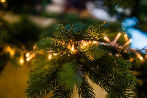 Kostnadsfri bild av jul, julbelysning, julgran, lampor