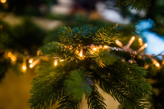 Free stock photo of lights, blur, tree, decoration