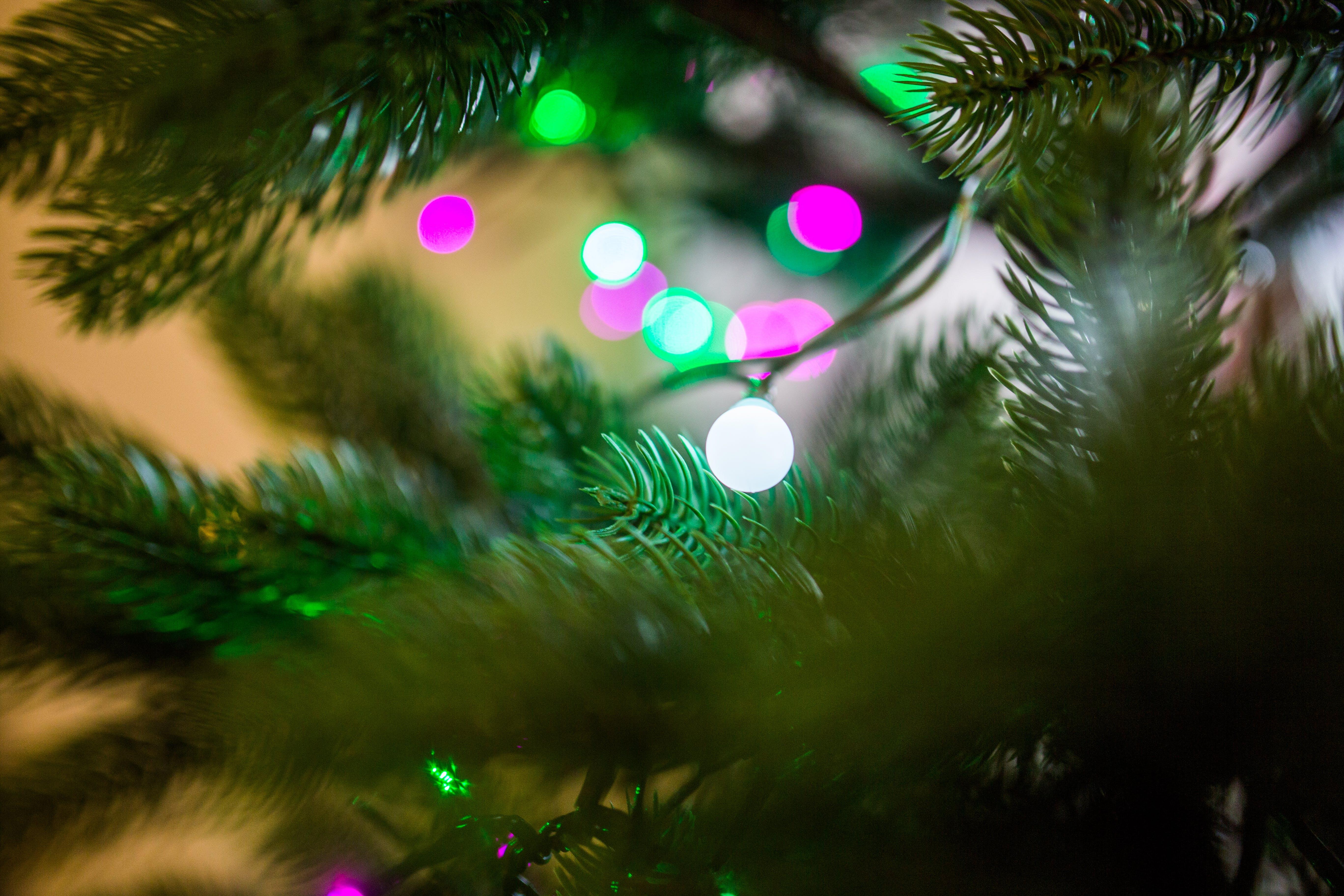 Green Fern Leaves Near Lights