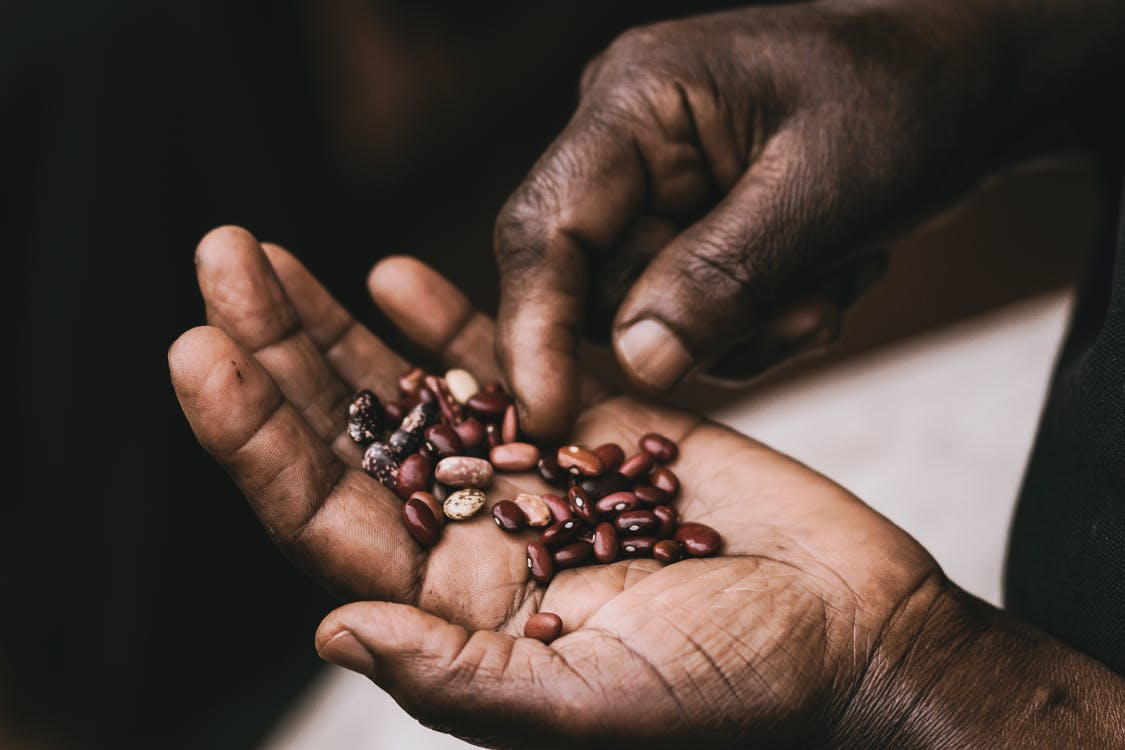 Brown Beans on Palm