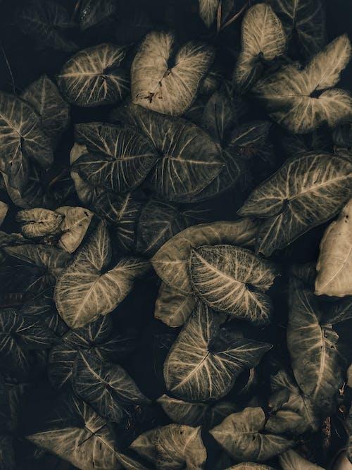 Безкоштовне стокове фото на тему «зелене листя, зелений, зростання, колір»