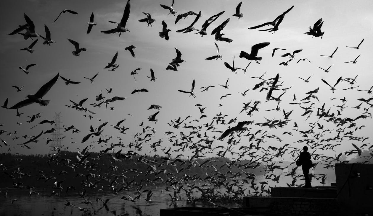 Greyscale Photography of Birds